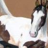 Pinto und Dülmener Wildpferd Acryl